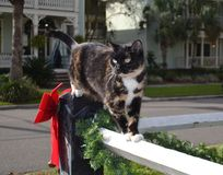 Christmas Cat Posing, White Fence, Red Bow, Pine. Cat on White Fence with Christmas Decorations Royalty Free Stock Images