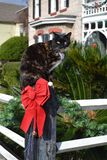 Christmas Cat Posing, White Fence, Red Bow, Pine 0. Christmas Cat Sitting on Fence Post with Decorations Royalty Free Stock Images