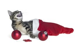 Christmas cat in red jelly bag cap Stock Photo