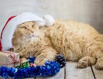 Christmas cat in red Santa Claus cap Stock Photos