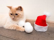 christmas cat in red Santa Claus hat, the concept of Christmas stock photos
