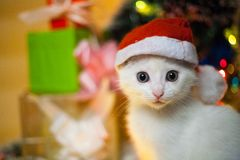 Christmas cat in red santa`s hat near christmas tree royalty free stock photography