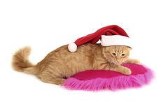 Christmas cat relax on pillow Stock Photos