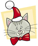 Christmas cat santa Stock Photography