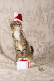 Christmas cat santa claus cap. Christmas cat wearing santa claus cap with a gift and bell Royalty Free Stock Images