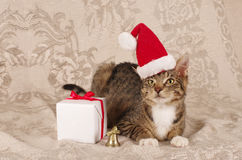 Christmas cat santa claus cap Stock Image