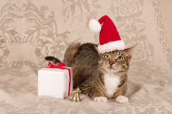 Christmas cat santa claus cap Stock Photo