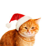 Christmas Cat in Santa Hat Royalty Free Stock Images