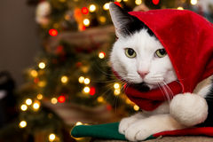 Christmas cat Royalty Free Stock Photography