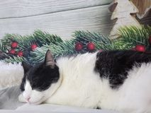 Christmas cat sleeping stock photos