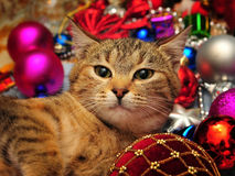 Christmas cat. Cat surrounded with Christmas ornaments Stock Photos