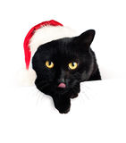 Christmas Cat and White Blank Paper Banner Background Stock Photo