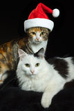 Cats with Santa cap. Two cats, one wearing a red Santa cap.  Black background Stock Images