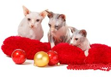Christmas cats Stock Photography