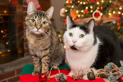 Christmas cats Royalty Free Stock Images