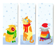 Christmas cats Stock Photos