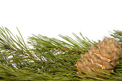 Christmas cedar branch and cone. On a white background it is isolated Stock Images