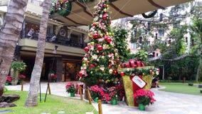 Christmas celebration in Hawaii stock photography