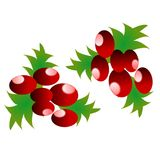 Christmas cherry decoration cherries. Christmas cherry cherries xmas decoration 12x12 inches png also available. All separate elements stock illustration