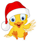 Christmas chick. Illustration of a cute Christmas chick Royalty Free Stock Image
