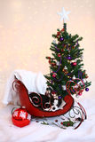 Christmas chihuachua sits in sleigh by Christmas tree Royalty Free Stock Photography