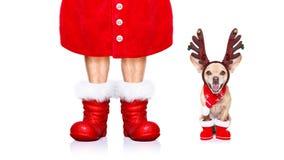 Christmas santa claus dog stock image