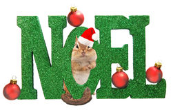 Christmas chipmunk Royalty Free Stock Images