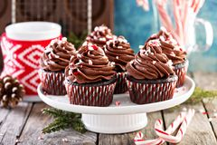Christmas chocolate peppermint cupcakes. With candy cane crumbs royalty free stock photo