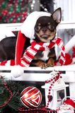 Christmas dachshund puppies. Christmas christmas  dog in santa hat Stock Image