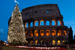 Christmas coliseum. Image of Rome's coliseum famous ancient arena with Christmas tree Royalty Free Stock Photos