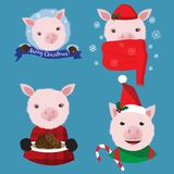 Christmas collection with four funny pigs on the blue background stock images