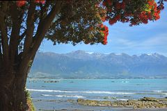 Christmas comes Early for Kaikoura,State Highway One Opened Toda Royalty Free Stock Images