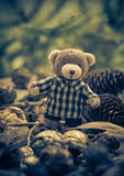 Christmas coming teddy bear green conifers cones Stock Image