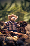 Christmas coming teddy bear green conifers cones Stock Images