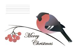 The Christmas composition of a bullfinch, rowan branch and reddish berries on a white background vector illustration