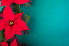 Christmas composition. Christmas green decorations, fir tree branches with red flowers on green background. Flat lay. Top view, copy space royalty free stock photos