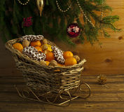 Christmas composition with evergreen and fresh clementines Royalty Free Stock Image
