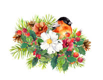 Christmas composition - finch bird, winter flowers, spruce tree,  mistletoe. Watercolor Royalty Free Stock Image