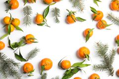 Christmas composition with fir branches, ripe tangerines and space for text on white background stock images