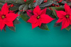 Christmas composition. Christmas green decorations, fir tree branches with red flowers on green background. Flat lay. Top view, copy space stock photo