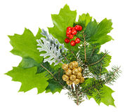 Christmas composition with ilex, fir and berries Royalty Free Stock Image