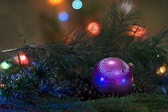 Christmas composition. New Year`s humiliation. New Year`s toy - a ball for decorating a Christmas tree with pine branches in the b stock images