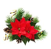 Christmas composition with pine twigs and red poinsettia flowers Stock Photography
