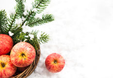 Christmas composition with red apples in basket and branch of sp Stock Photos