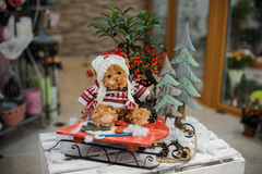 Christmas composition with toy bear Stock Image