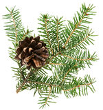 Christmas cone with fir branch Stock Images