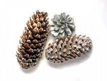 Christmas cones. Painted silver isolated on white background Stock Images