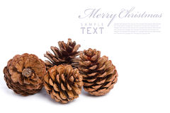 Christmas cones on a white background. With copy space stock image