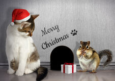 Christmas congratulate concept, Funny cat with santa hat and gif Royalty Free Stock Images