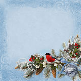 Christmas congratulatory background with card, pine branches, birds, berries and Christmas decorations. Blue background with pine branches, Christmas decorations Stock Photography